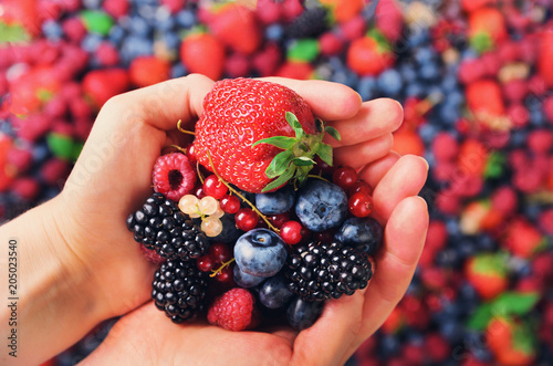 Fototapeta Woman hands holding organic fresh berries against the background of strawberry, blueberry, blackberries, currant, mint leaves. Top view. Summer food. Vegan, vegetarian and clean eating concept. obraz