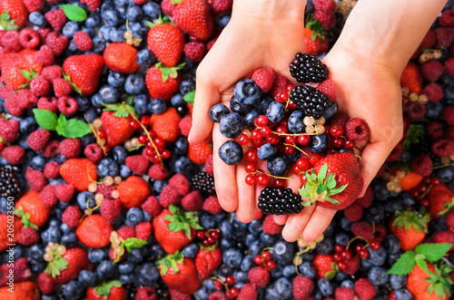 Woman hands holding organic fresh berries against the background of strawberry, blueberry, blackberries, currant, mint leaves Wallpaper Mural