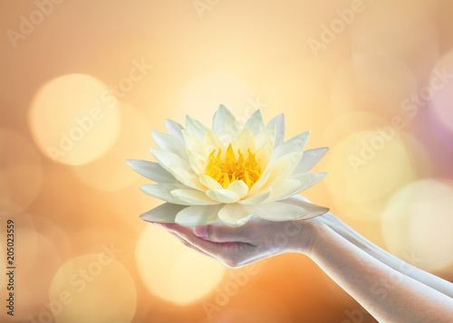 Vesak day, Buddhist lent day, Buddha's birthday, Buddha Purnima worshiping, and world human spirit concept with woman prayer's hands holding lotus water illy flower