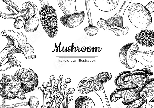 Mushroom hand drawn vector frame. Isolated Sketch organic food d ...