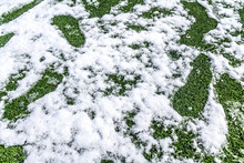 Snow In The Spring On An Artificial Lawn