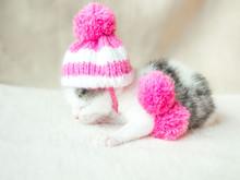 A Cute Little Kitten In A Pink...