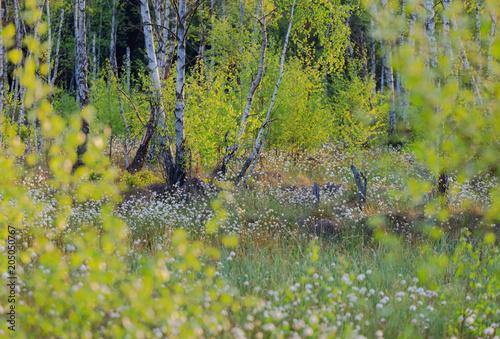 Wiosenny Las Bzorzowy  - 205050767