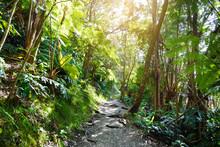 Kilauea Iki Trail In Volcanoes...