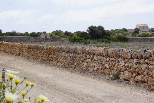 Papiers peints Cappuccino Pairies fleuries et murets en pierre à Minorque, île paradisiaque des Baléares, Espagne