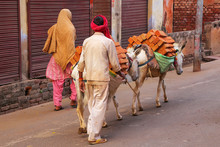Local Man Walking With Donkeys...