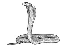 Indian Cobra Illustration, Dra...
