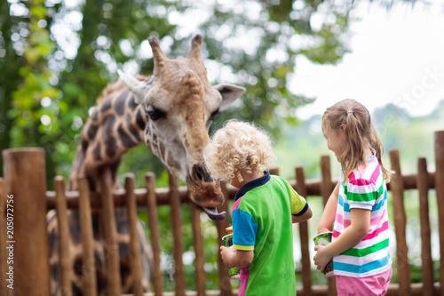 Kids feed giraffe at zoo. Children at safari park.