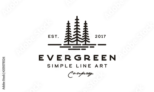 pine evergreen fir hemlock spruce conifer cedar coniferous cypress larch pinus t Wallpaper Mural
