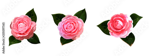 Stampa su Tela Floral bouquet design with camellia