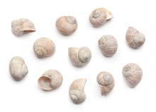 Composition Of Empty Shells  I...