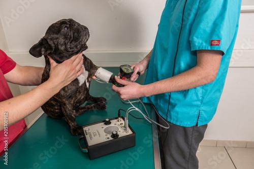 Foto  vétérinaire, hypertension artérielle chez le chat  et le chien est une maladie cardiovasculaire mesurer avec le tensiomètre
