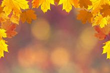 Colorful Fall Season Leaves On Blurry Bokeh Copy Space Background. Selective Focus Used.