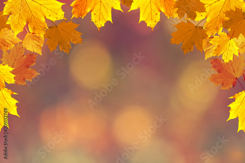 Photo  Colorful fall season leaves on blurry bokeh copy space background