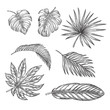 Tropical palm leaves set, vector sketch illustration. Hand drawn tropic nature and floral design elements
