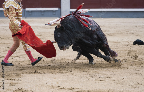 La pose en embrasure Corrida Bullfighter next to the bull in the ring