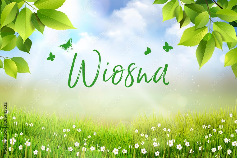 Fototapeta Wiosna - widok na trawę, kwiaty oraz na łąkę z pięknym rozmyciem bokeh