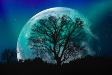 Lone Tree With Moon At It Larg...