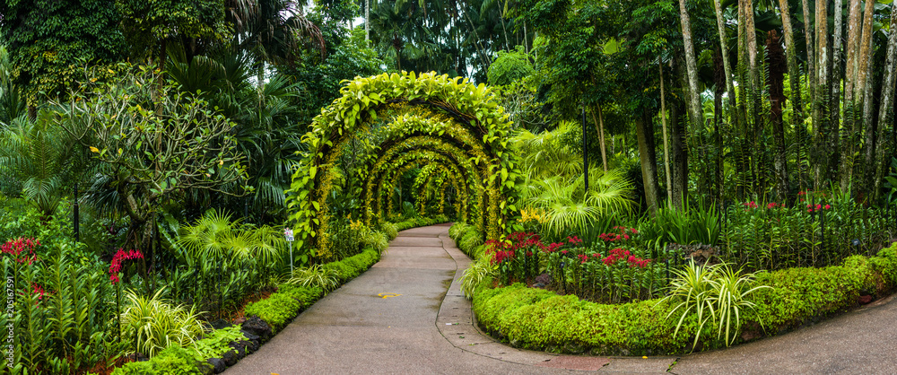 Fototapety, obrazy: panorama, orchid arch in Singapore botanical gardens