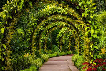 Fototapetaorchid arch in Singapore botanical gardens