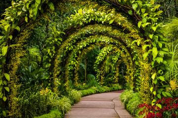 Fototapeta Ogrody orchid arch in Singapore botanical gardens