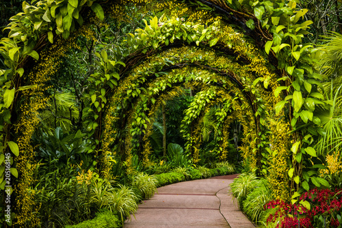 Canvastavla orchid arch in Singapore botanical gardens