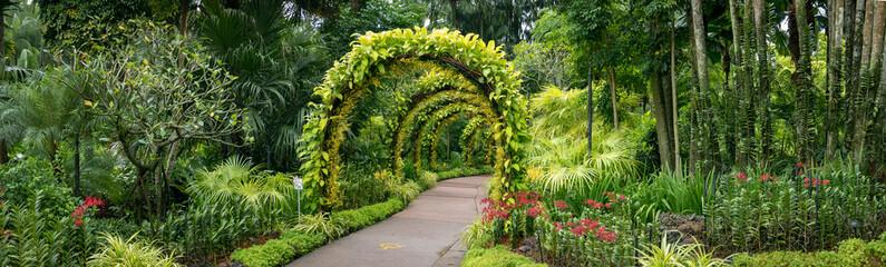 Fototapetapanorama, orchids in Singapore botanical gardens