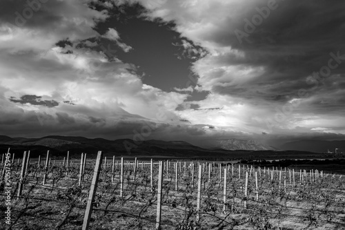 Foto op Canvas Donkergrijs Amazing landscape of vineyard in central Bulgaria with dramatic clouds in the sky and in black and white