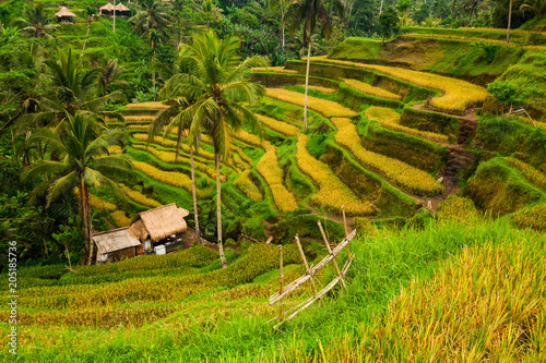 In de dag Asia land Terrace rice fields in Tegallalang, Ubud on Bali, Indonesia.