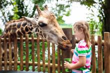 Kids Feed Giraffe At Zoo. Chil...