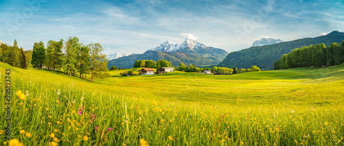 Poster Oranje Idyllic summer landscape in the Alps with blooming meadows at sunset