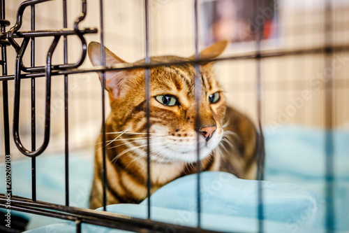 Afraid homeless alone cat with frightened look, lying on cage in shelter waiting for home, for someone to adopt him Wallpaper Mural