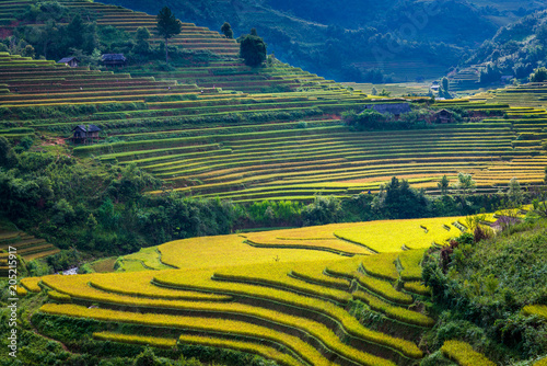 Valokuva  Beautiful mountain range with rice terraced view point at Mu Cang Chai district,