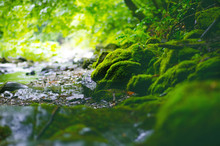 Beautiful Green Countryside. River With Big Rocks Covered By Moss And Deciduous Forest. Green Landscape