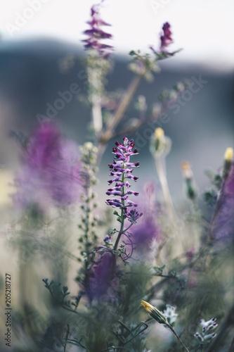 Purple flowers in Lleida