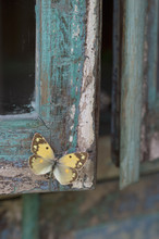 Painted Blue Wood And Yellow Butterfly