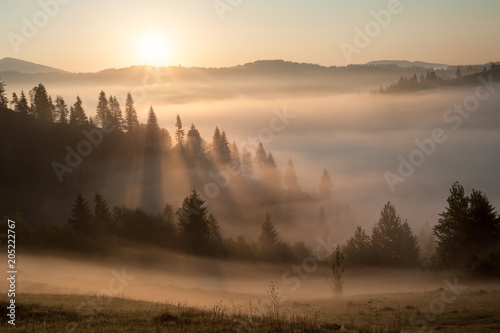 Poster Morning with fog Yellow foggy sunrise in the mountains