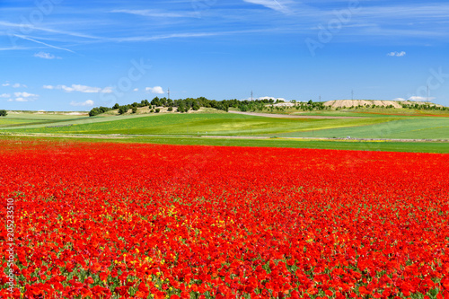 Foto op Plexiglas Rood traf. field of red poppies