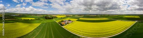Fotografie, Obraz  Blühende Rapsfelder (Brassica napus), Gehöft mit Solarstrom und Biogas, Kreis Fr
