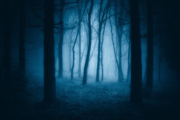 dark scary forest with creepy trees