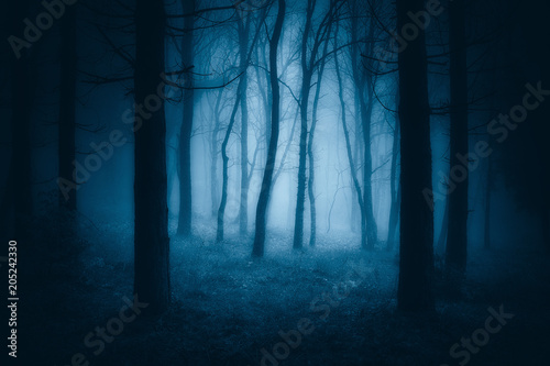 Spoed Fotobehang Bos dark scary forest with creepy trees