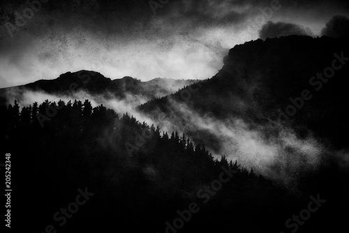Photo Stands Black dark landscape with foggy forest at night and grungy textures
