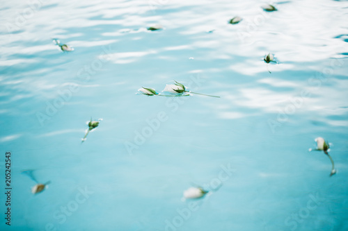 White flowers on blue water