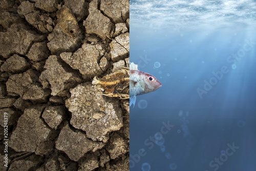Obraz Climate Change and Global warming concept. Fish bone on cracked earth and Fish in ocean metaphor climate change impact to Aquatic Animals - fototapety do salonu