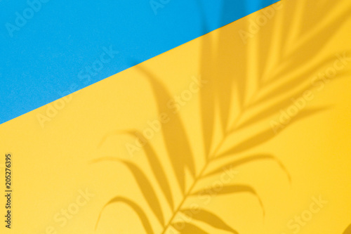 Top view of green tropical Areca palm leaf shadow on blue and yellow background Fototapete