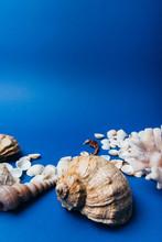 Seashells, Sea Horse, Coral On...