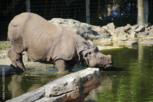 Keuken foto achterwand Neushoorn Rhinoceros life