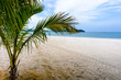 Beautiful beach. View of nice tropical beach with palms. Holiday and vacation concept.