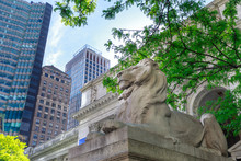 Lion Guarding The New York Public Library In Manhattan