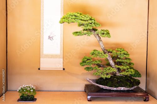 Aluminium Prints Bonsai 床の間に盆栽